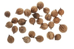 Coriander seeds isolated on white background top view
