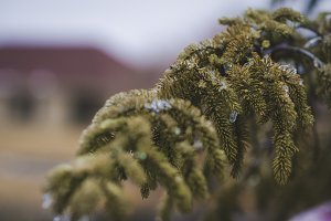 The winter branch
