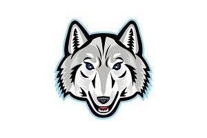 Artic Wolf Head Front Mascot
