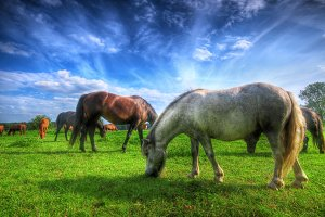Beautiful wild horses on the field