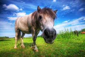 Beautiful wild horse on the field