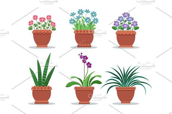 Room Plants In Clay Pots For Interior Design Decor