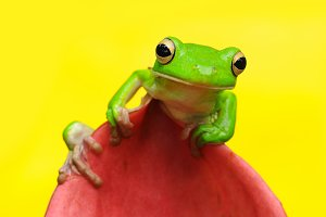 a tree frog on a pink flower