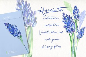 Hyacinth watercolor collection