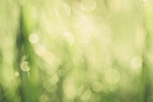 Natural abstract background