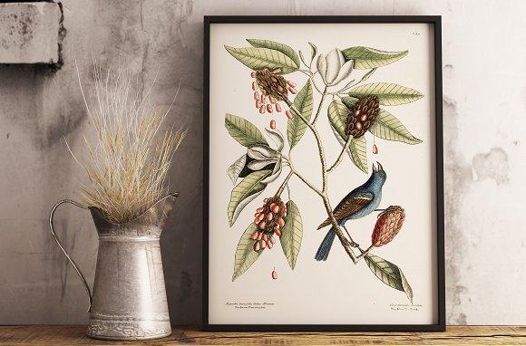 Vintage Floral Illustration Painted