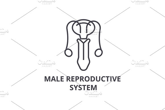male reproductive system thin line icon, sign, symbol, illustation, linear concept, vector