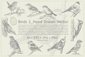 Birds 1_Hand Drawn Vector