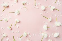Flat-lay of white ranunculus flowers over pink background, copy space by  in Abstract
