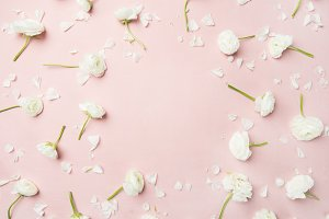Flat-lay of white ranunculus flowers over pink background, copy space