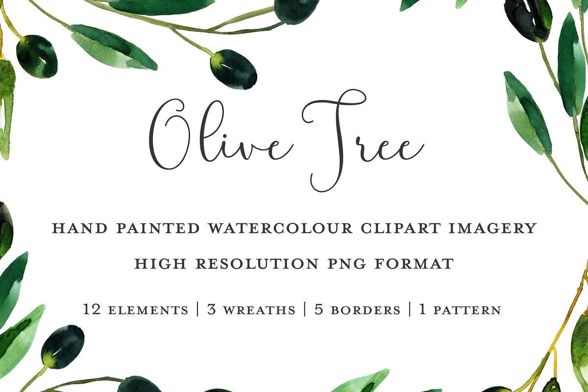 Olive Branch Clipart Illustrations Creative Market