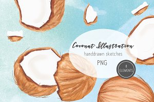 Coconut Illustration Clipart