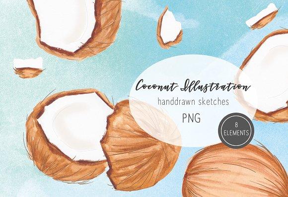 Coconut Illustration Clipart