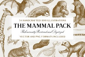 54 Handcrafted Mammal Illustrations