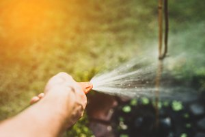 Irrigating the soil at Garden