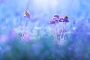 Snails and Ladybug over Mushrooms