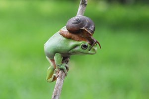 Frog with Snail