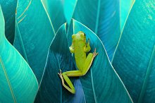 Frog in Between the Leaves by andri priyadi in Animals