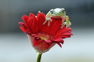 Frogs on Flowers