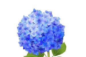 Realistic blue hydrangea flower