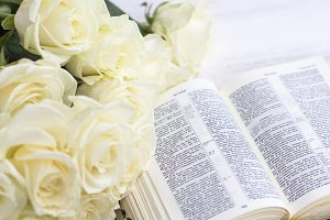 White roses and the Bible on a white