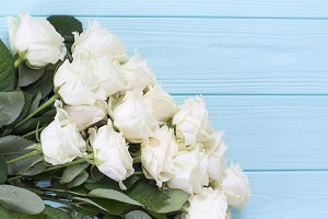 White roses on turquoise background