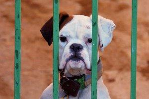 Dog guard.jpg