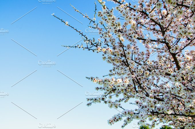 Branches white flowers.jpg - Nature