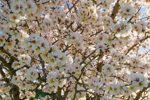 Floral background.jpg