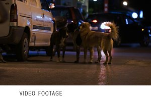 Three stray dogs in the street