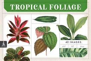 Vintage Tropical Foliage Plants