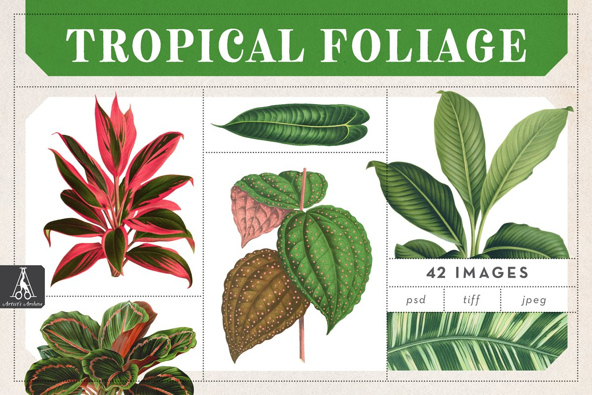 Vintage Tropical Foliage Plants Custom Designed Illustrations