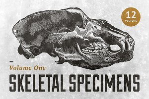 Skeletal Specimens Vol. 1