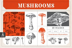 Mushroom Vector Illustrations