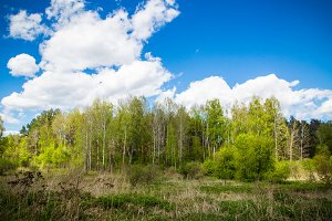 Green forest and blue sky.