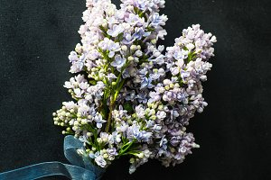 Lilac flower spring concept