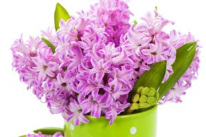 Beautiful Hyacinths in vase over whi