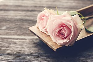 Pink Roses on Rustic Wood