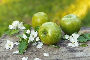Fresh sweet juicy spring green apples with flowers