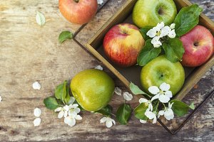 juicy spring green red apples with flowers