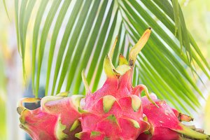 Pitahya dragon fruit near palm