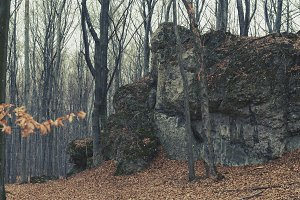 Rock in the autumn forest