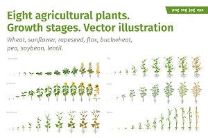 Vegetable crop growth stages