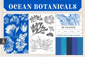 Ocean Botanicals Illustrations