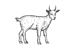 Goat farm animal engraving vector illustration