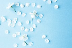 Spring background with white petals
