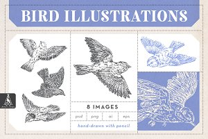 Hand Drawn Bird Illustration Pack