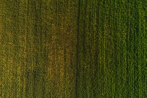 Aerial view of a green field