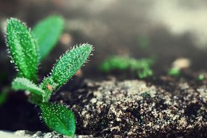 green plant grow in stone