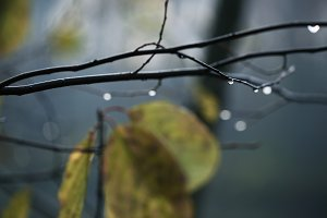 rain in dark forest and drops of wat